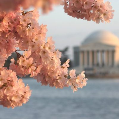 All Things Pink are Blossoming in our Nation's Capital
