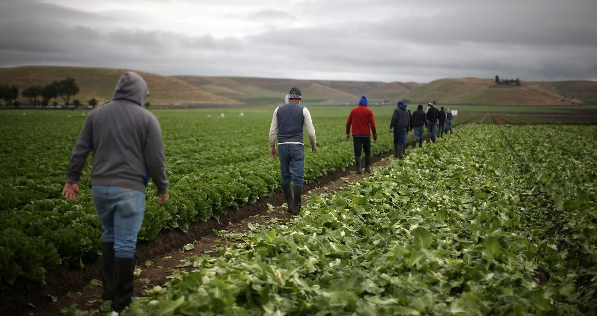 New Trump Administration Rule Will Likely Lower Farm Worker Wages